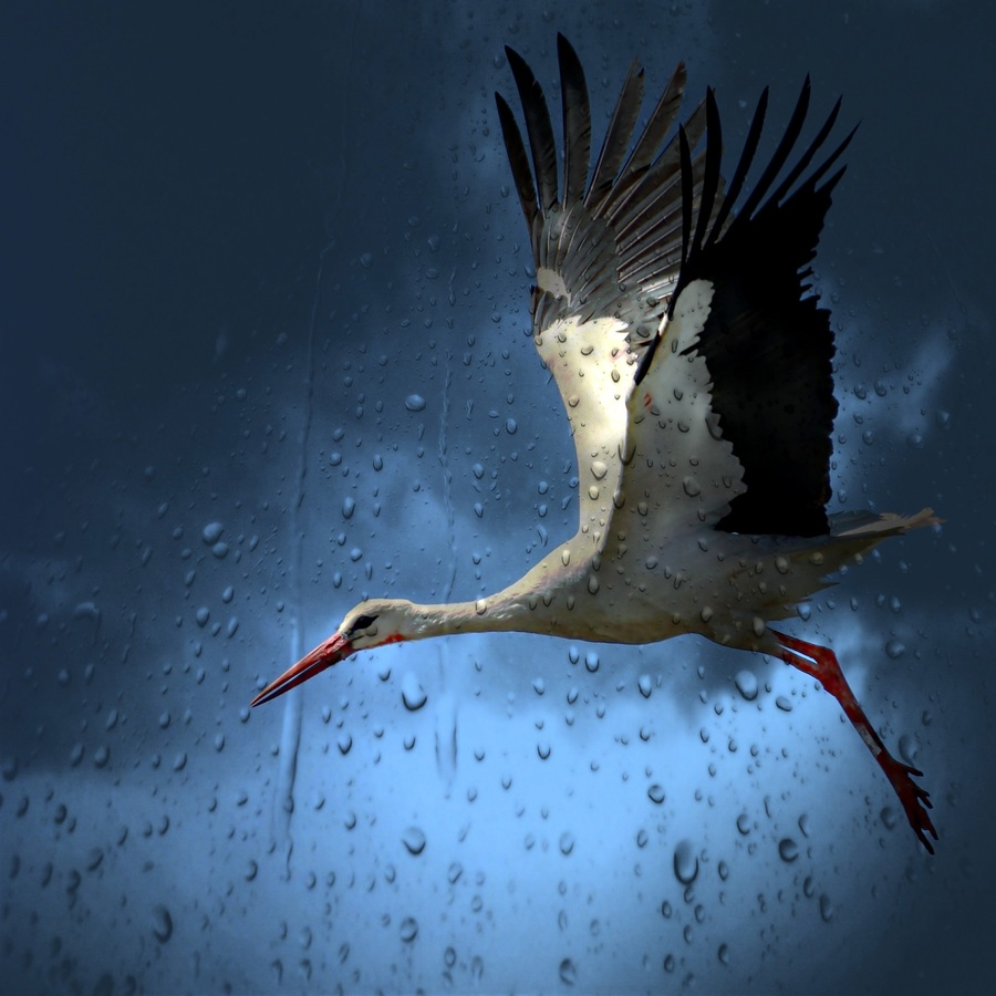 Marine Biology balance by birds